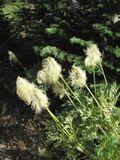 WildflowersCotton